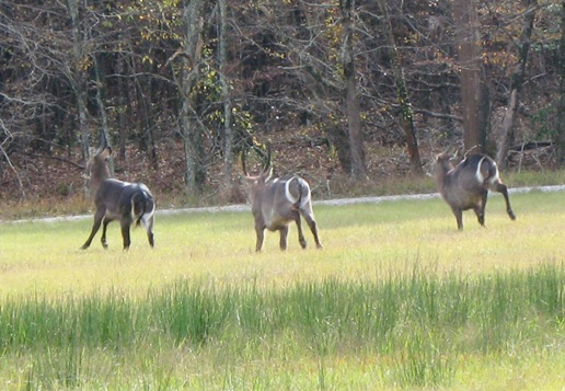 1121_deer_running.jpg